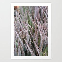 Pokey Plant Art Print