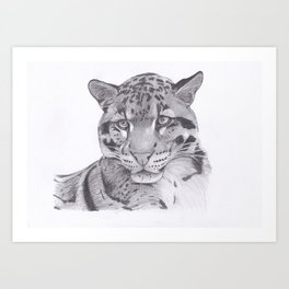 Clouded Leopard - Big Cat Art Print