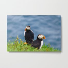 The Puffins of Mykines in the Faroe Islands VIII Metal Print