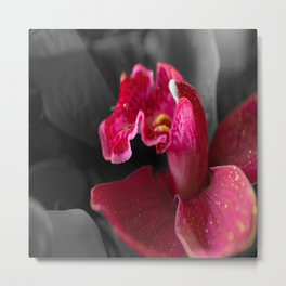 Solo Red Orchid on Grey Background #decor #society6 Metal Print
