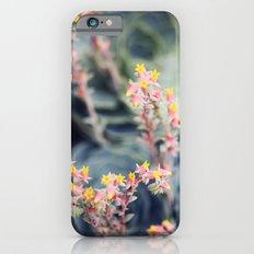Echeveria #2 Slim Case iPhone 6s
