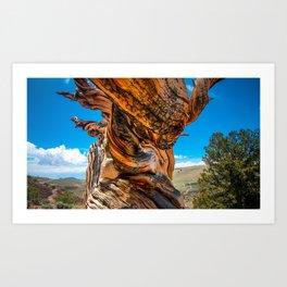 Ancient Bristlecone Pine Tree Art Print