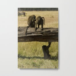 Olive Baboons Metal Print