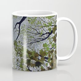 Tree canopy in the spring Coffee Mug