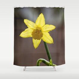 Daffodil II Shower Curtain