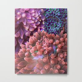 Anemone Collage (Rose Bubble Tips) Metal Print