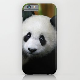 Giant Panda Cub iPhone Case