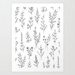 New Wildflowers Art Print