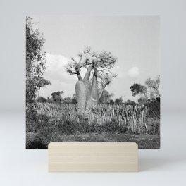 Madagascar Baobab Tree Black and White Vintage Photography Mini Art Print