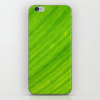 banana leaf iPhone & iPod Skins featuring banana leaf by blackpool