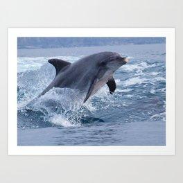 Bottenose dolphin Art Print
