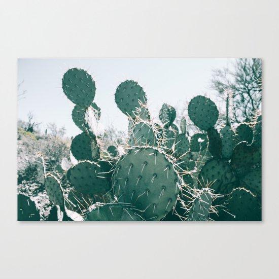 Arizona Cactus II Canvas Print
