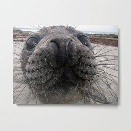 Southern Elephant Seal Pup Metal Print