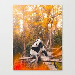 Kung Fu Pandas - Cute Pandas from China Canvas Print