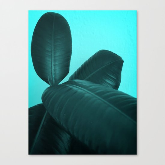 Ficus Elastica #3 #art #society6 Canvas Print