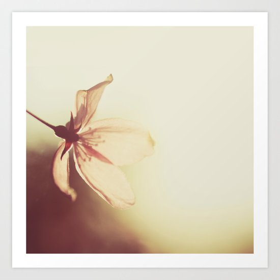 blossoms morning light Art Print
