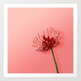 Spider Lily on a Pink background Art Print