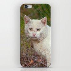 Wild White Cat 435 iPhone & iPod Skin