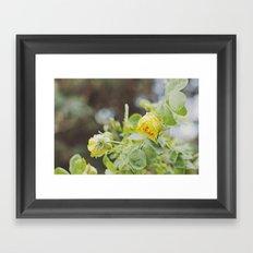 Rosa amarilla Framed Art Print