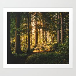 Woods  - Forest, green trees outdoors photography Art Print