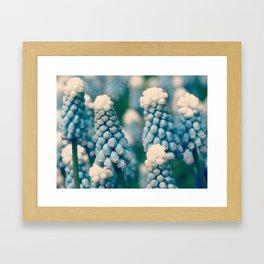 Muscari Field  - JUSTART © Framed Art Print