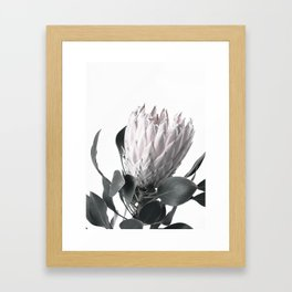 Pretty Protea Framed Art Print