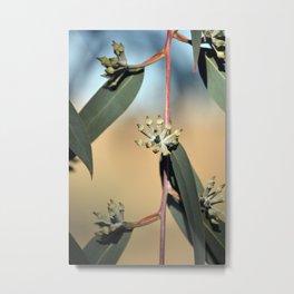 Eucalyptus Buds Metal Print