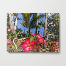 Tropical Pink Bahamian Flowers Metal Print