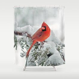 Cardinal on Snowy Branch (sq) Shower Curtain