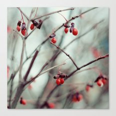 December Dream Canvas Print