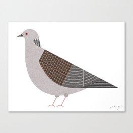 Oriental turtle dove Canvas Print