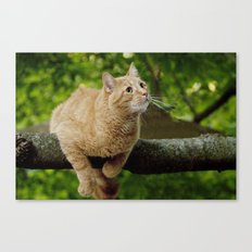 Photograph of a Cat hanging on a Limb Canvas Print
