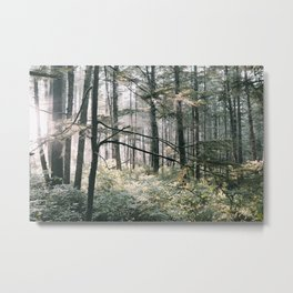 Lush Forest Metal Print