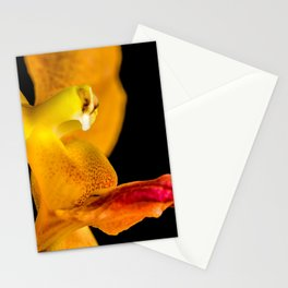 Orange Orchid On Black 1 Stationery Cards