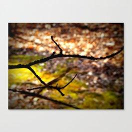 Forest Bokeh Canvas Print