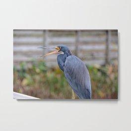 Birds and Beaks Metal Print