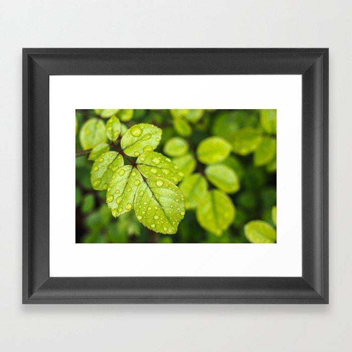 Plant Patterns - Green Scene Gerahmter Kunstdruck