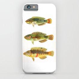 Vintage fish art iPhone Case
