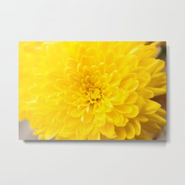 Yellow Dahlia Photography Print Metal Print
