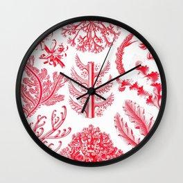 Ernst Haeckel Florideae Red Algae Wall Clock