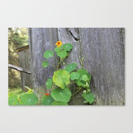 The Garden Wall Canvas Print