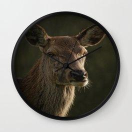 Portrait Of A Wild Red Deer Wall Clock