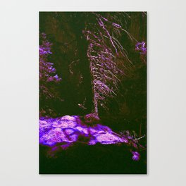 Messages From The Forest Canvas Print