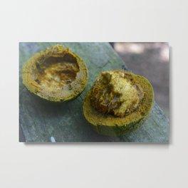 Black Walnuts Metal Print