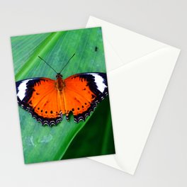 Orange Lacewing Butterfly Stationery Cards