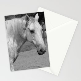 Horse In Black And White Stationery Cards