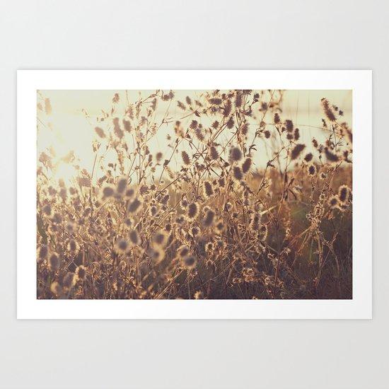 Field Sun Flare Art Print