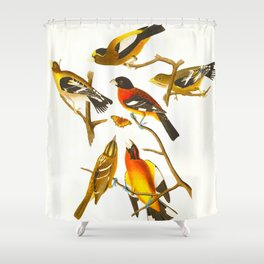 Evening Grosbeak Bird Shower Curtain