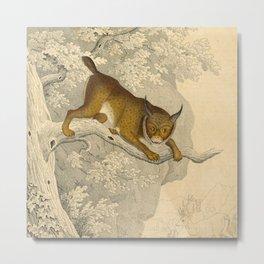 Wildcat Metal Print