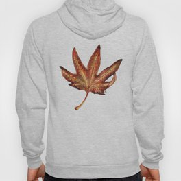 Field Maple (Acer Campestre) Hoody